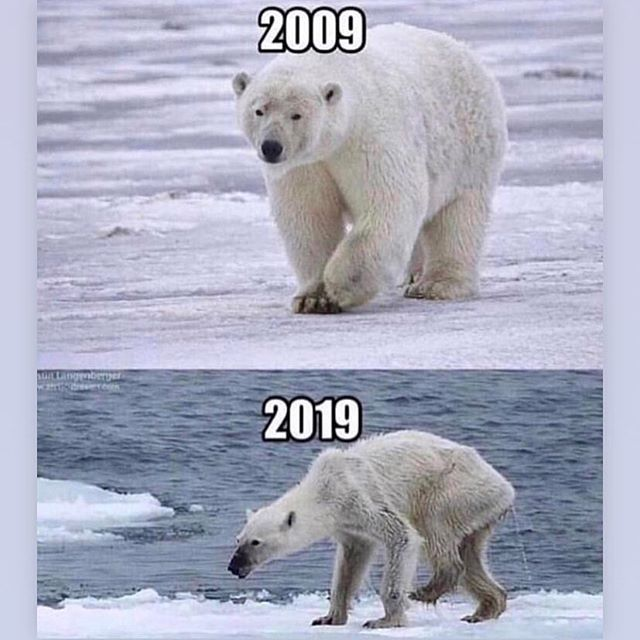 Over 10 years we have been hurting not only our planet but also the animals that live in it.