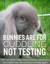 This is an innocent animal who is about to be used on testing of make up products.